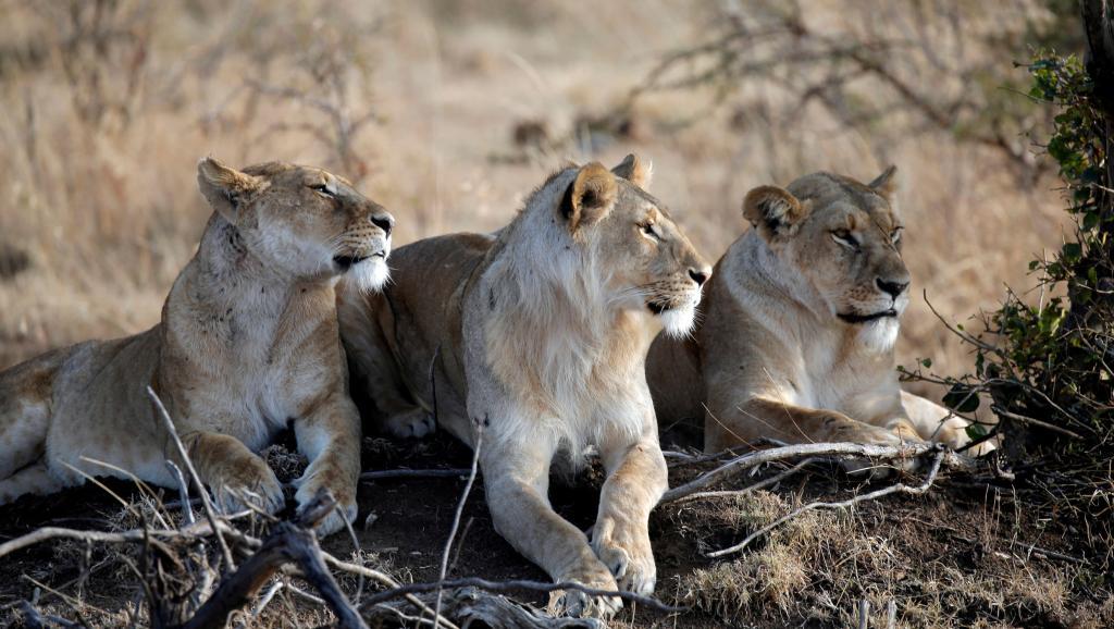 La sixième extinction de masse des animaux s'accélère — Biodiversité