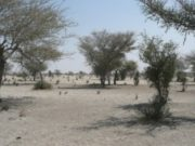 sahara sahel climat secheresse